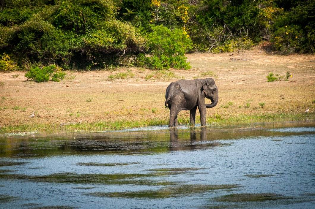 Into The Wild At Yala National Park
