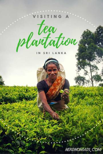 Visiting-a-sri-lanka-tea-plantation-3