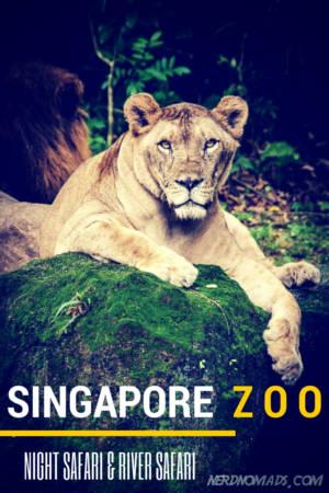 Singapore z o o-2