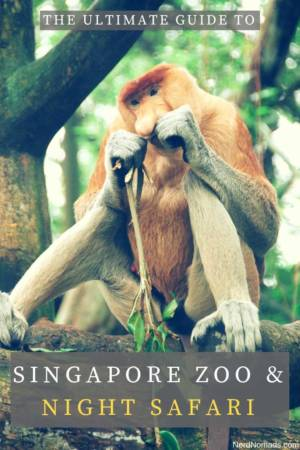 Guide to Singapore Zoo and Night Safari