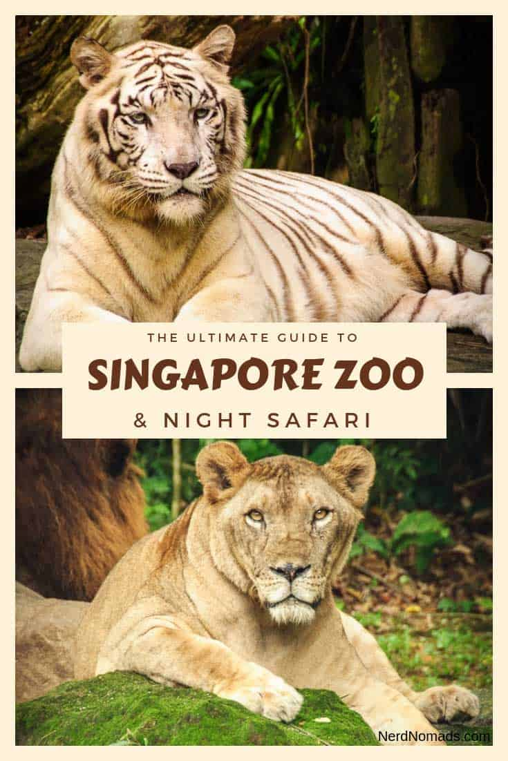 singapore zoo and river safari nerd nomads. Black Bedroom Furniture Sets. Home Design Ideas