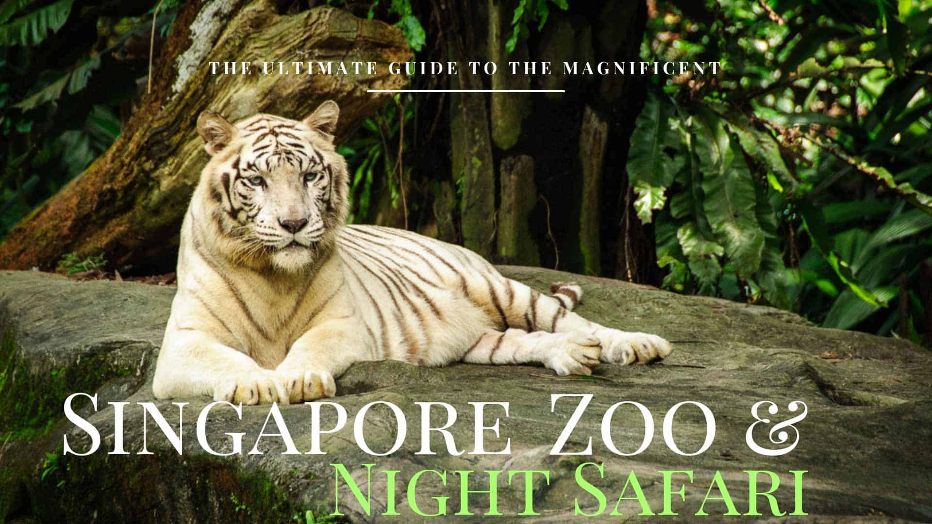 The Ultimate Guide To Singapore Zoo, River Safari & Night Safari