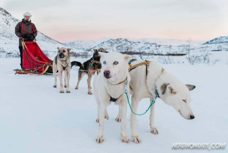 Me on a self-drive Dog Sledding Tour In Tromso