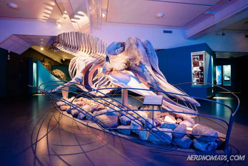 A big whale at Tromso Museum