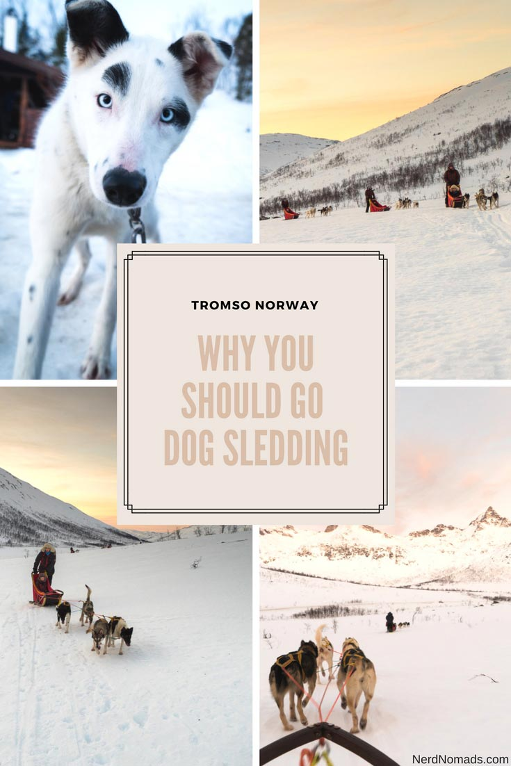 Dog sledding is a must-do if you plan to visit Tromso in Norway. It is great fun and the perfect way to see the nature and Northern Lights! #tromso #norway #dogsledding #huskies