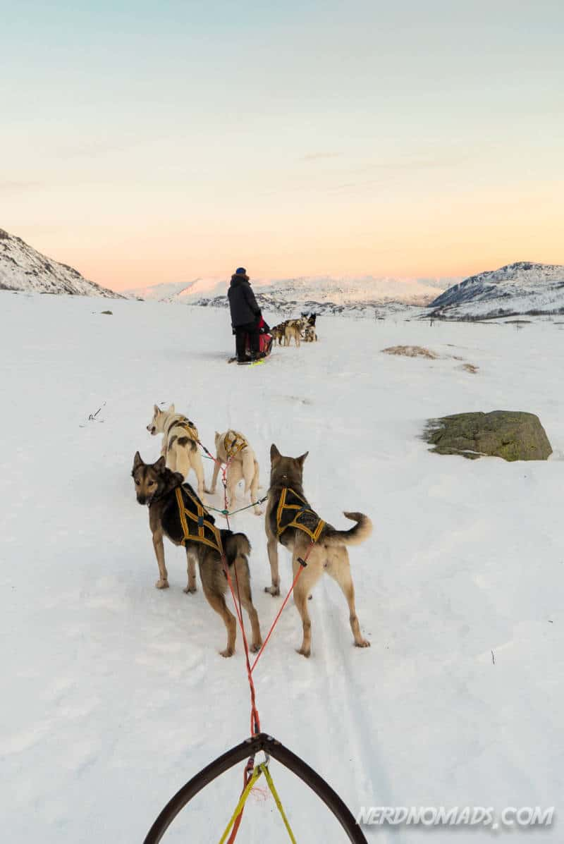 Sunset dog sledding