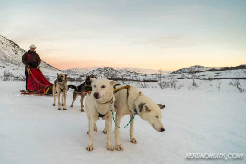 A dog sledding team of four dogs