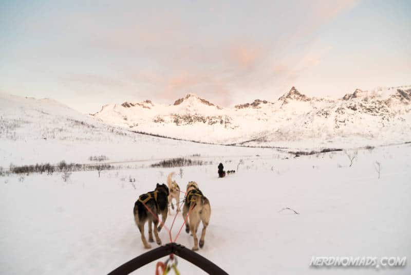 Dog sledding at Kattfjordeidet in Tromso