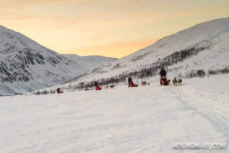 Six dog teams at Active Tromso