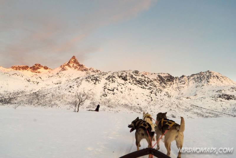 Dog sledding on Kvaloya in Tromso Norway