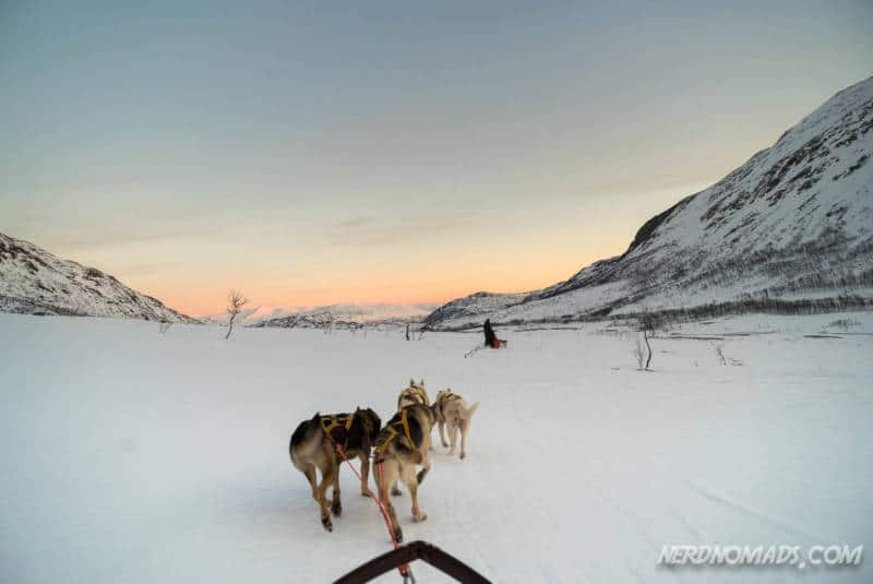 Alaskan huskies dog sledding in Tromso