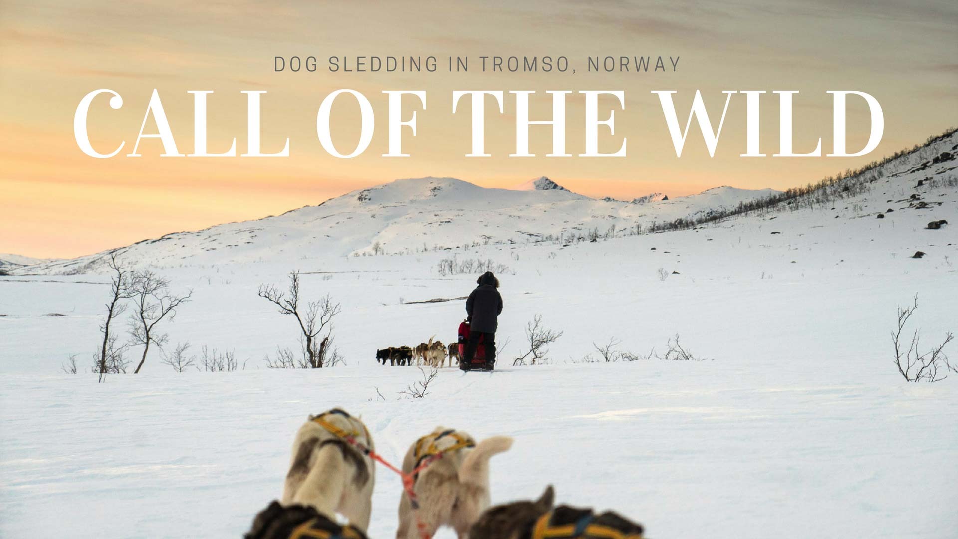 Call Of The Wild – Dog Sledding in Tromso, Norway