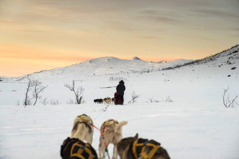 Dog Sledding in Tromso Nowary