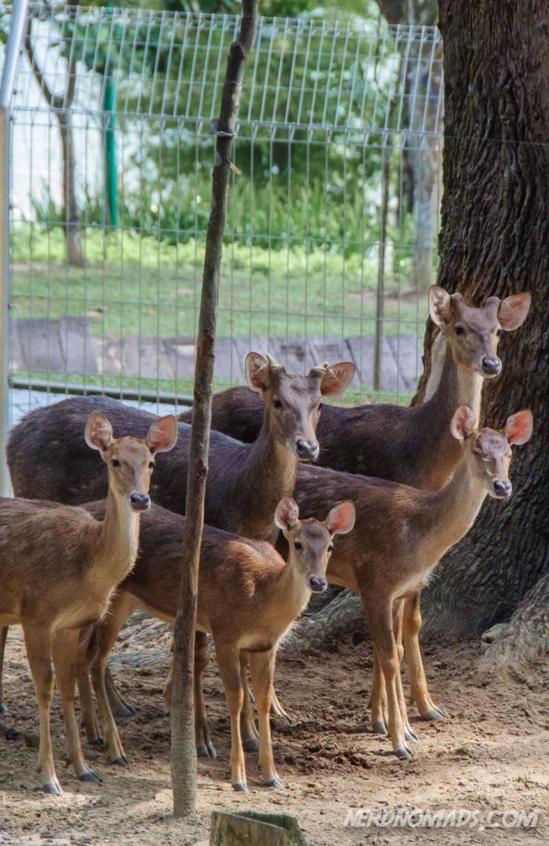 Deer at Lake Gardens KL