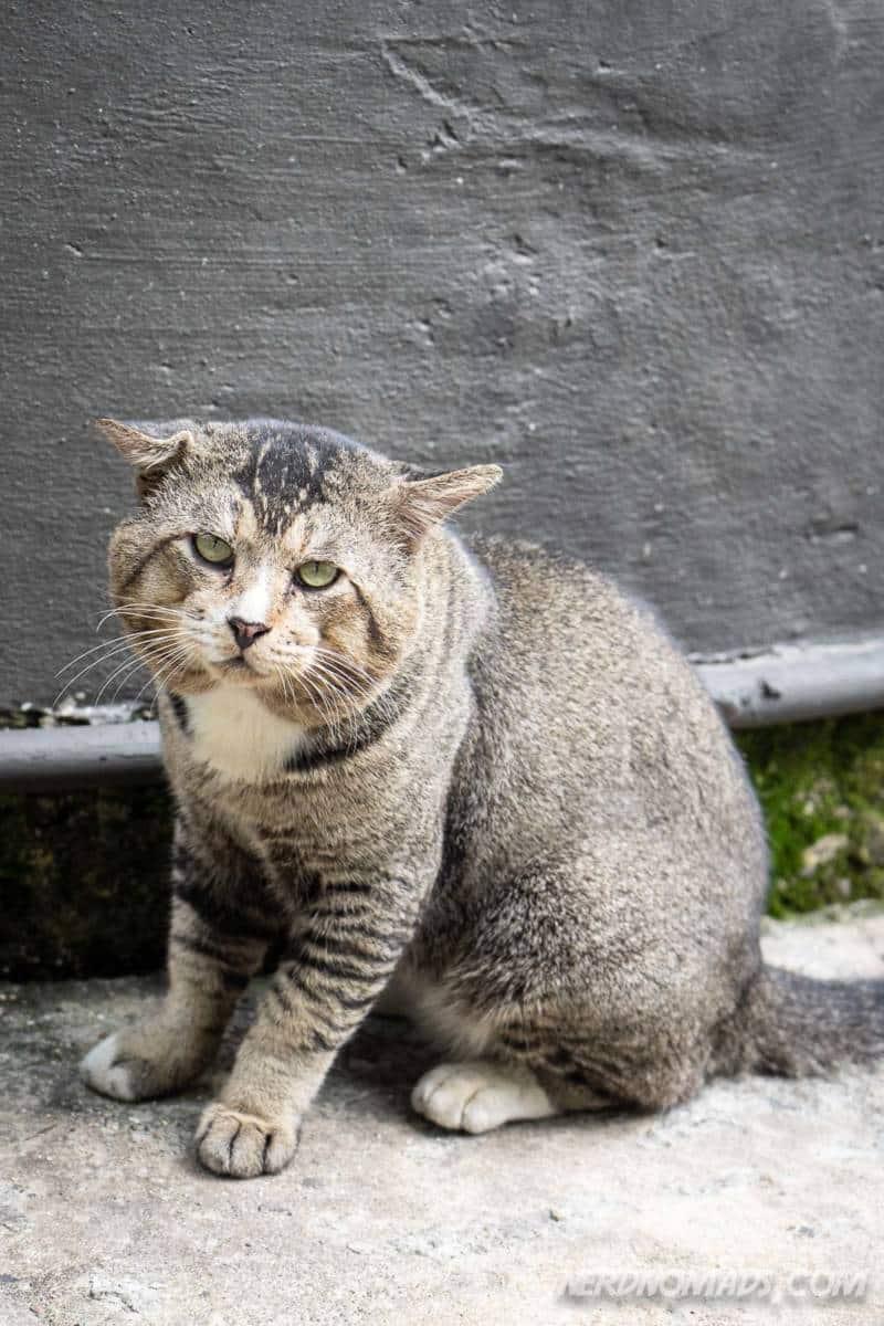 Cat outside VCR Cafe KL