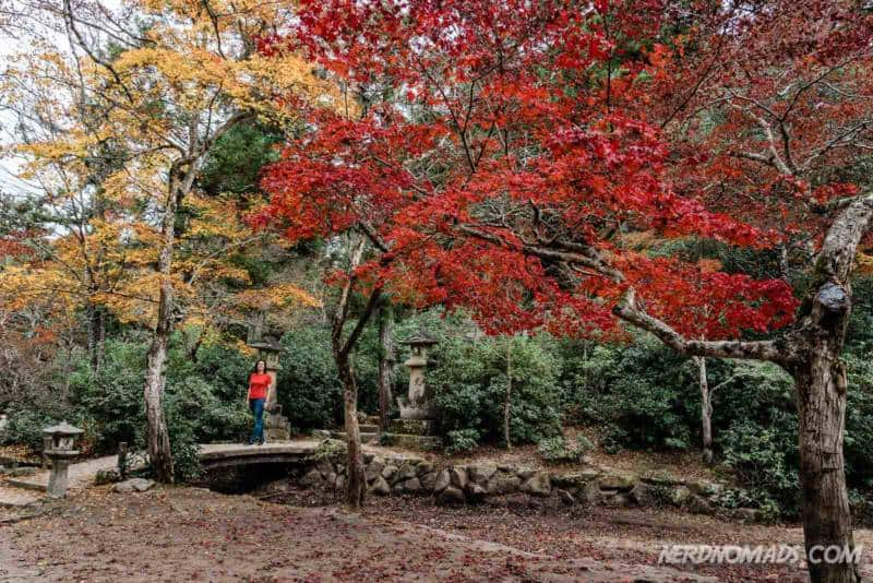 Lovely autumn colors at Mount Misen Miyajima Ropeway