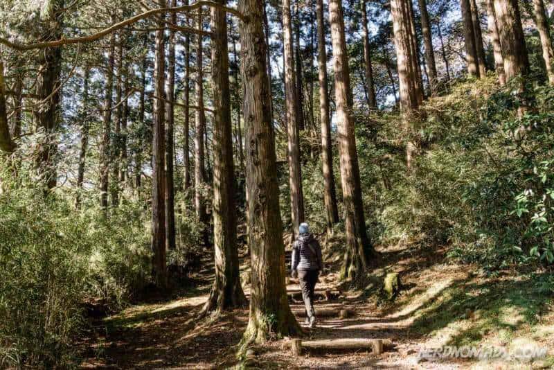 Lovely walk through Onshi Park in Hakone