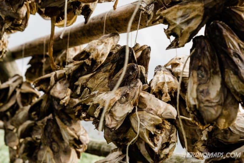 Stockfish heads Svinoya, Svolvaer, Lofoten