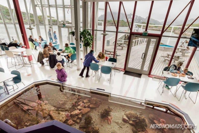 Cafe with a great view at Lofoten Aquarium/ Lofotakvariet i Kabelvåg