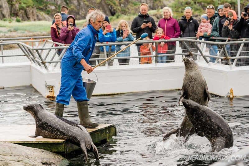 Feeding of seals at Lofoten Aquarium/ Lofotakvariet i Kabelvåg