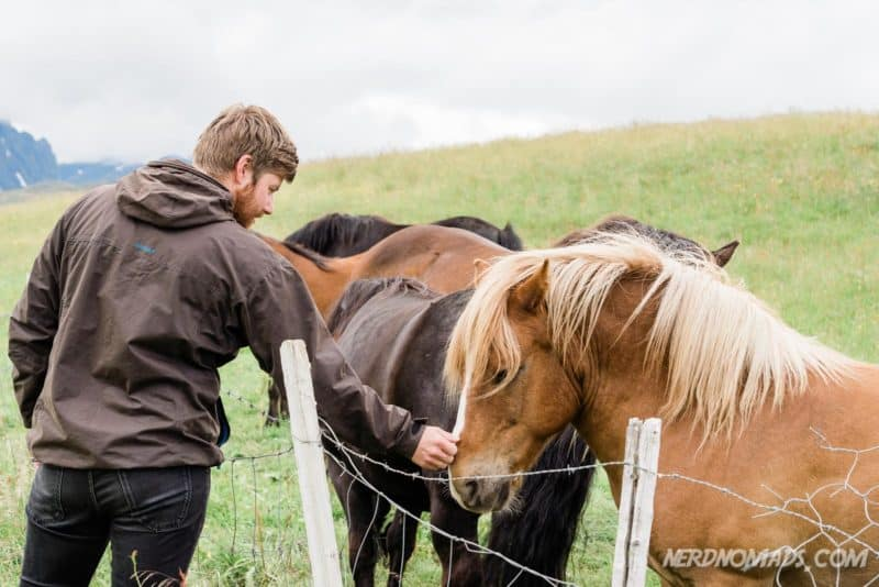 Horse at Lofotr