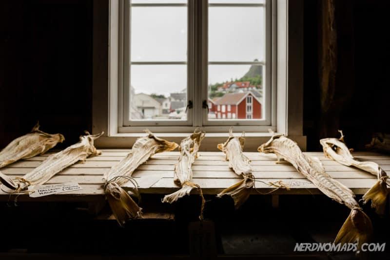 Stockfish get categorized at Lofoten Stockfish Museum