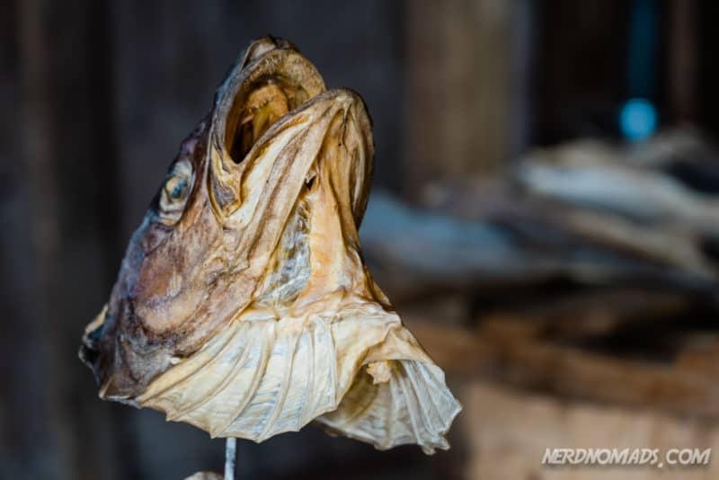 Fish head at Lofoten Stockfish Museum