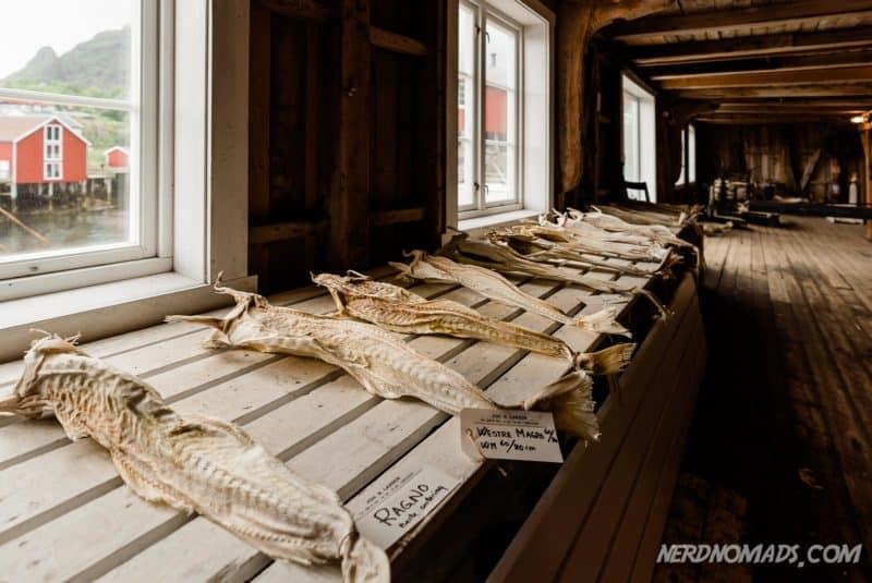 Lots of stockfish at Lofoten Stockfish Museum