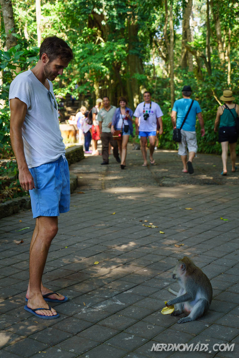434aaa899809 Getting Attacked By Monkeys In Monkey Forest Ubud