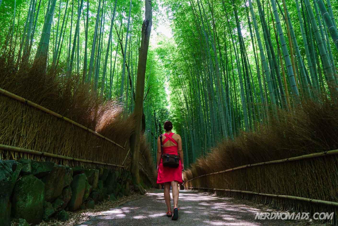 Bamboo Grove Kyoto Nerd Nomads