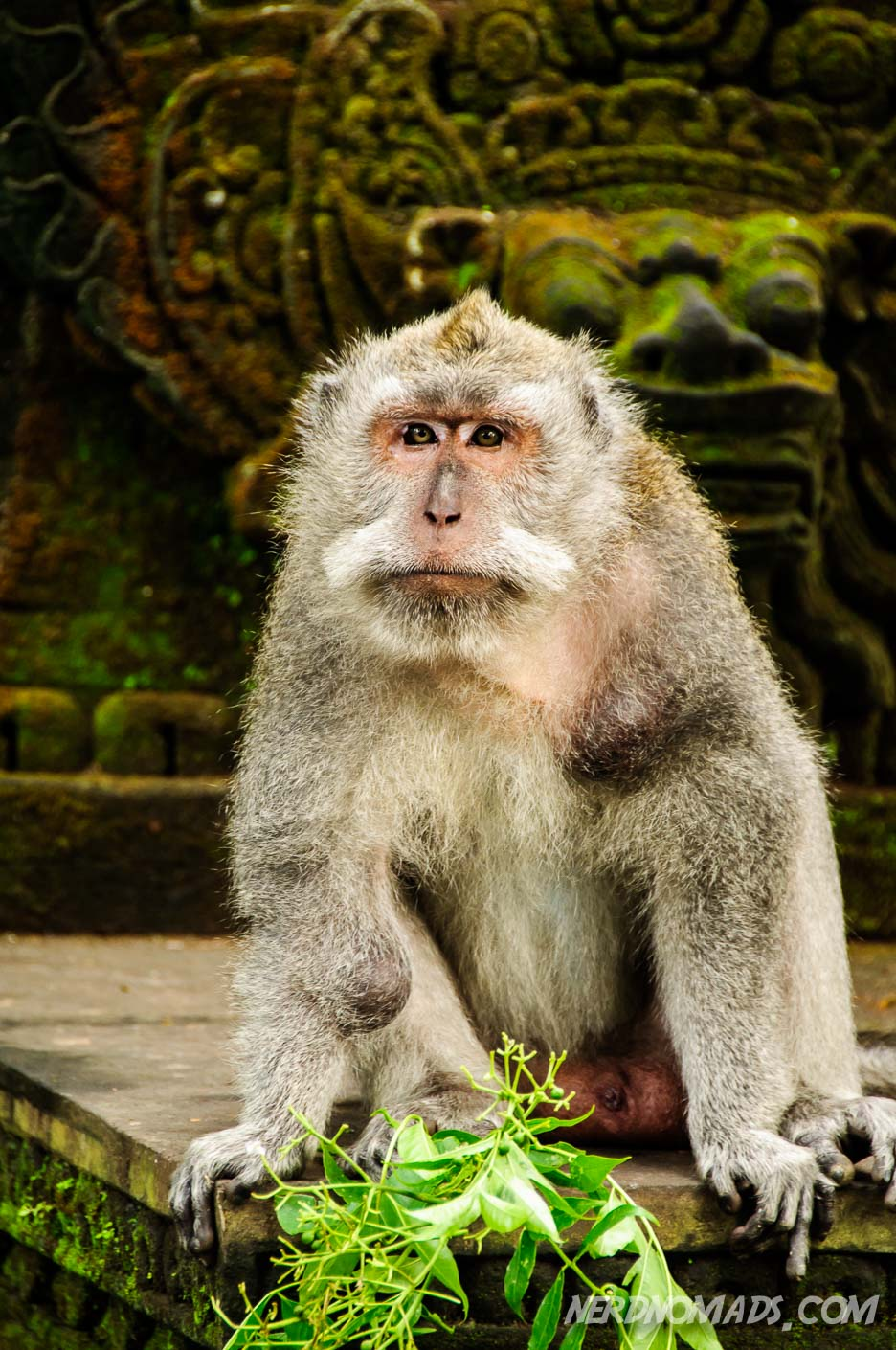 Getting Attacked By Monkeys In Monkey Forest Ubud Bali