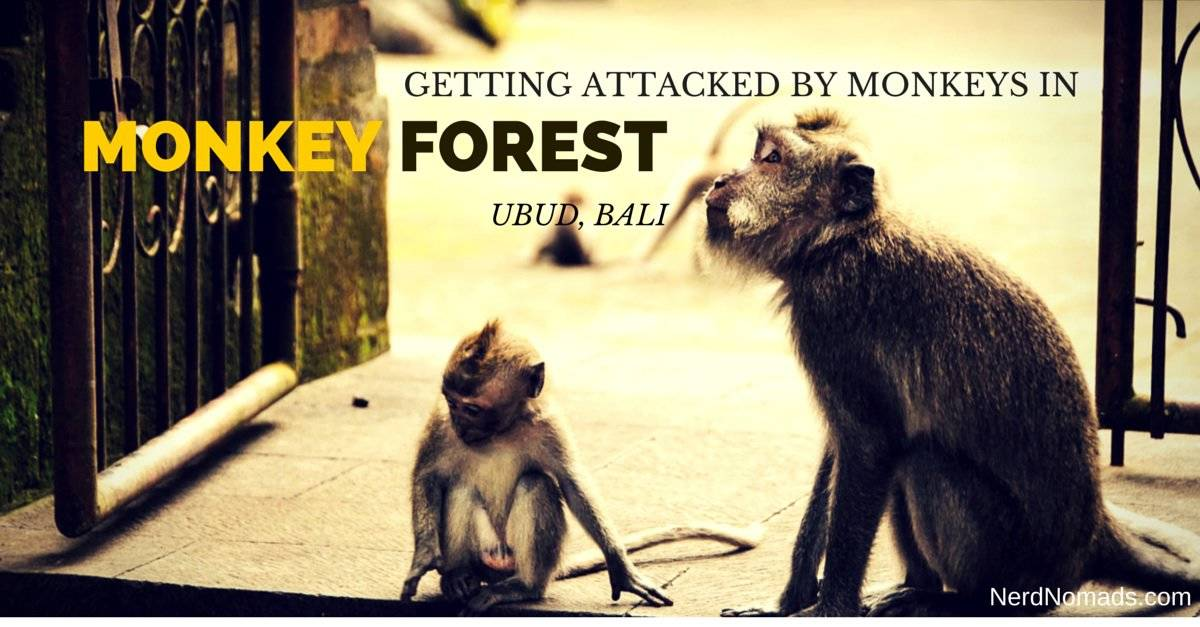 Getting Attacked By Monkeys In Monkey Forest Ubud, Bali