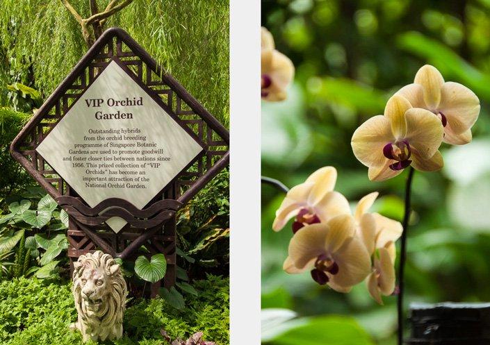 orchid_skilt